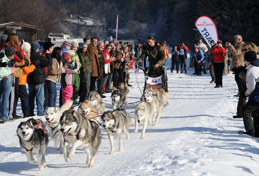 Internationale Huskyrennen, Angerberg
