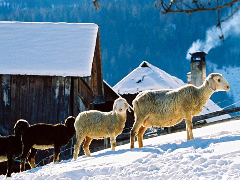 Advent ganz ursprünglich erleben in der Steiermark